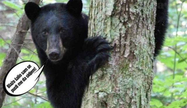 Image result for bukva i medvjed